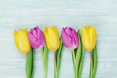 郁金香在土气桌上开花为3月8日,国际妇女天,生日或母亲节,美丽的春天卡片 库存图片