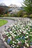 郁金香在布查德花园 BC维多利亚 免版税图库摄影