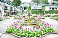 郁金香在布查德花园 BC维多利亚 库存照片