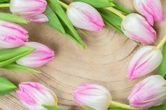 郁金香在木头的花框架 图库摄影