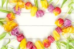 郁金香在白色木头的心脏框架 库存照片