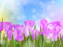 郁金香在蓝天的庭院里。EPS 10 库存图片