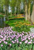 郁金香在Keukenhof -最大的花园 库存图片