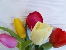 郁金香季节性日期行军花束在一张白色木背景桌上的 库存图片