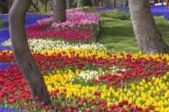 郁金香庭院在伊斯坦布尔,作为每年郁金香节日一部分的土耳其 免版税库存图片