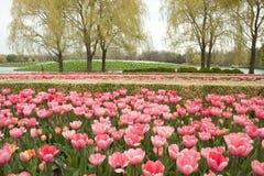郁金香庭院,春天 免版税库存照片