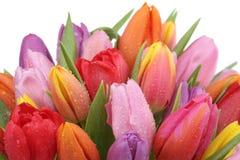 郁金香开花在春天、生日或者母亲节isola的花束 免版税库存照片