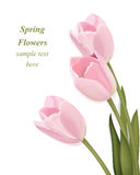 郁金香开花花束贺卡 以后的春天 水彩现实装饰传染媒介例证 图库摄影