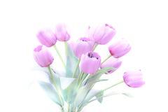 郁金香开花高关键抽象和软的颜色 库存照片
