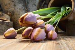 郁金香异常的颜色花束在一张木桌上的 免版税库存图片