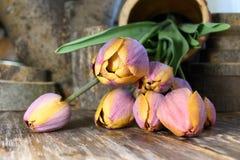 郁金香异常的颜色花束  库存图片