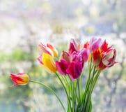 郁金香明亮的春天花束在背景的与bokeh 免版税库存图片