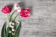 郁金香春天在与文本空间的灰色石背景开花 库存照片