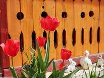 郁金香春天花在庭院和公园里 库存图片