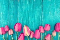 郁金香框架在绿松石土气木背景的 春天fl 免版税库存图片