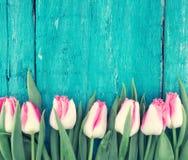 郁金香框架在绿松石土气木背景的 春天fl 库存照片