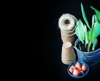 郁金香电灯泡、盆的新芽、柳条帽子、风信花和工具 免版税库存图片
