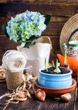 郁金香电灯泡、盆的新芽、柳条帽子、风信花和工具 库存图片