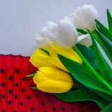 郁金香白色和黄色用不同的组合 库存图片