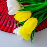 郁金香白色和黄色用不同的组合 免版税库存照片