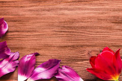 郁金香的瓣在木背景的 免版税库存图片