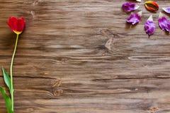 郁金香的瓣在木背景的 库存图片