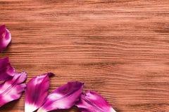 郁金香的瓣在木背景的 免版税库存照片