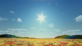 郁金香的领域,对下午的timelapse日出 向量例证