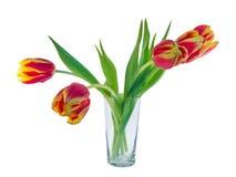 郁金香红色和黄色在透明玻璃 免版税图库摄影