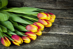 郁金香红色和黄色花束在木背景开花 下雨 免版税库存照片