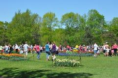 郁金香节日在阿尔巴尼,纽约州 库存照片