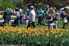 郁金香节日在阿尔巴尼,纽约州 图库摄影