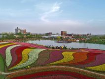郁金香花和多彩多姿的曲调空中照片  免版税库存照片