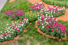 郁金香花圃在花形状的 免版税库存图片