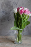 郁金香花在春天 库存照片