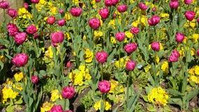 郁金香花堆卢森堡庭院 免版税库存图片