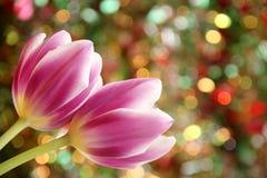 郁金香花墙纸-复活节卡片材料的照片 库存图片