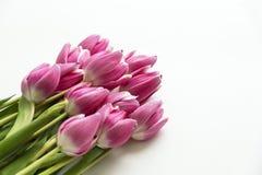 郁金香花壁角花束在白色的 免版税库存照片