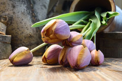 郁金香花束在一张木桌上的 库存图片