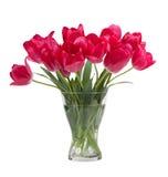 郁金香花束在白色背景隔绝的玻璃花瓶的 库存图片
