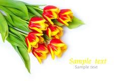 郁金香花束在空白背景的 免版税库存照片