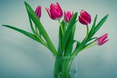 郁金香花束在蓝色背景的 免版税库存照片