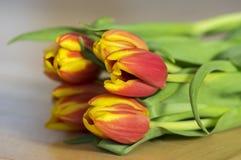 郁金香花束细节,装饰春天开花,在绽放的黄色红色头状花序与叶子 图库摄影