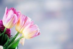 郁金香花束 图库摄影