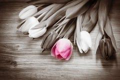 郁金香花束 库存图片