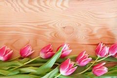 郁金香花边界。 免版税库存图片
