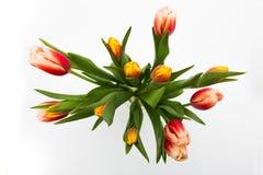 郁金香花从上面 库存照片
