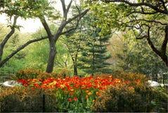 郁金香莎士比亚庭院中央公园纽约 免版税库存照片