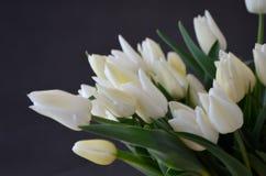 郁金香雪夫人经典胜利白色 郁金香颜色光花束,白色 免版税库存图片