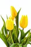丁香黄色小�_蓬子菜broomrape - orobanche caryophyllacea -有丁香气味的寄生植物